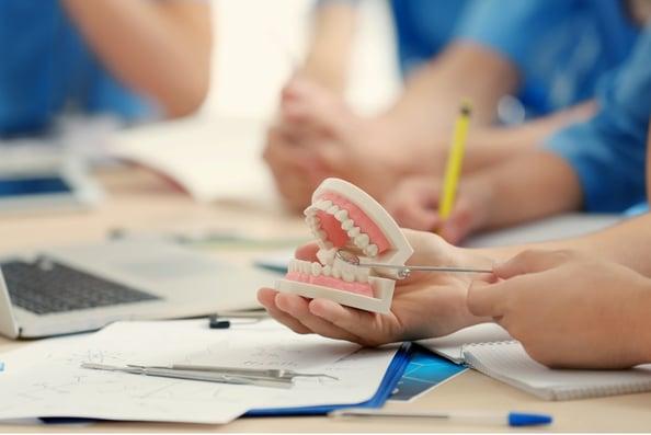 typodont teeth