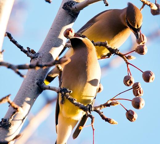 3-spotlight-ray-brimhall-birds