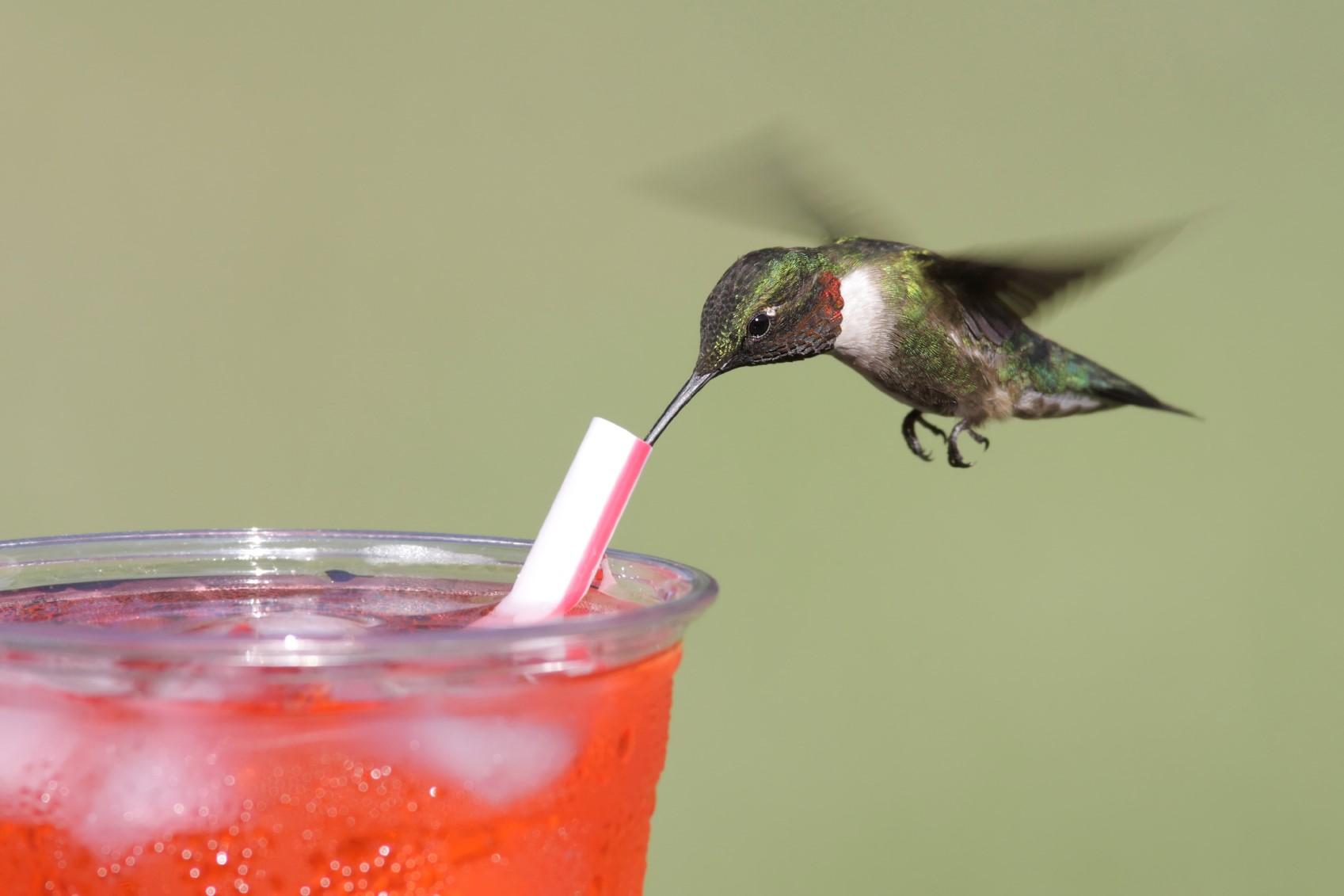hummingbird orange soda.jpg